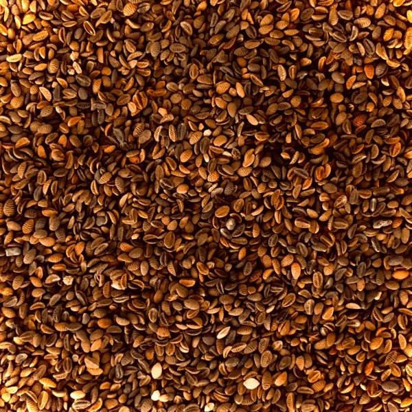Phacelia 0,5 kg - 10 kg Bienenweide Saatgut Imkerpflanze